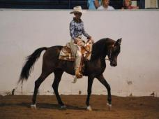 Hate Halle riding in western show