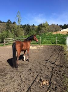 Horse enjoying the sun in an outdoor paddock
